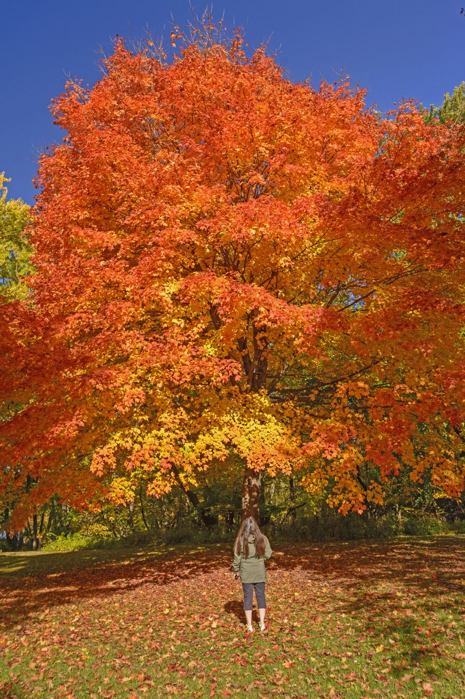 The 5 Best Trees for Your Yard | House TIpster