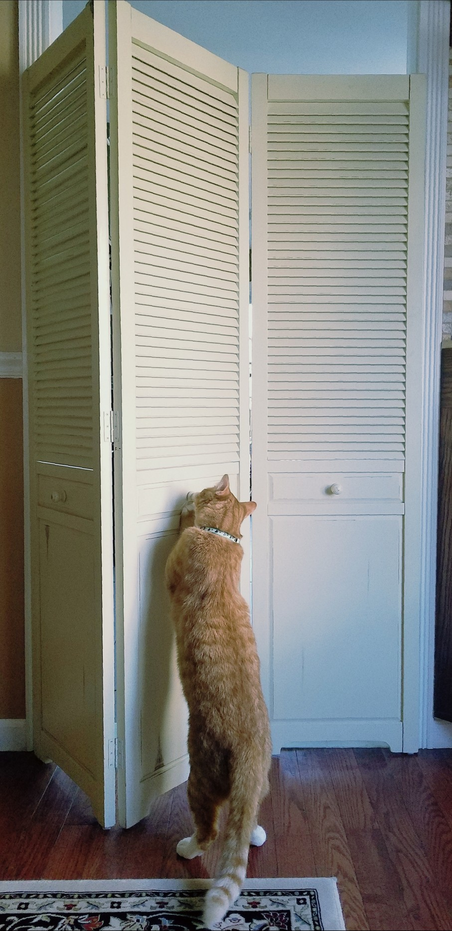 How To Keep Your Cat From Getting Outside With Door Barriers