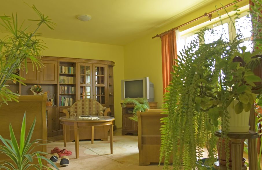 Yellow Living room with green plants and carpet.