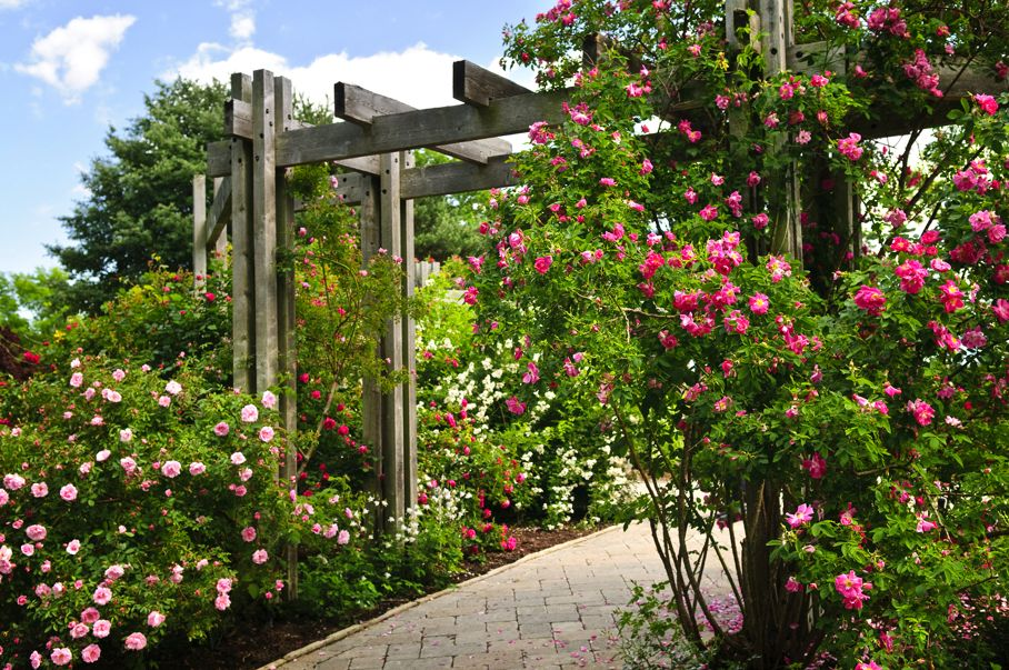 Lush green garden with stone landscaping flowers and arbor