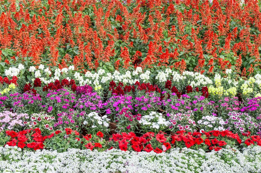 Multicolored flowerbed in the garden with mixed flowers