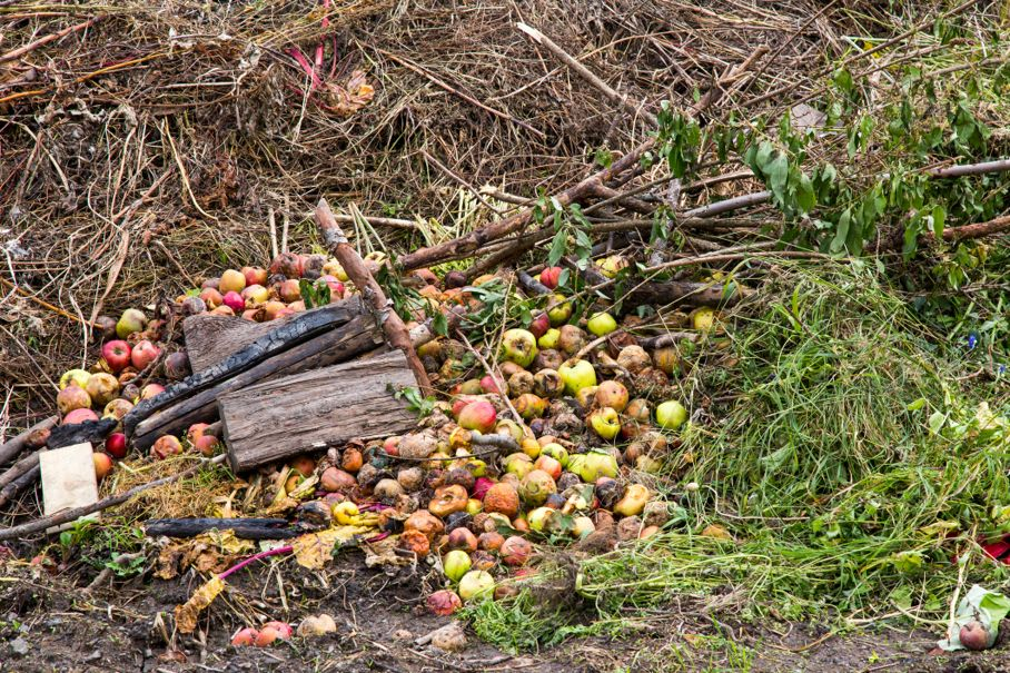 Compost heap with grass and apples on an allotment site