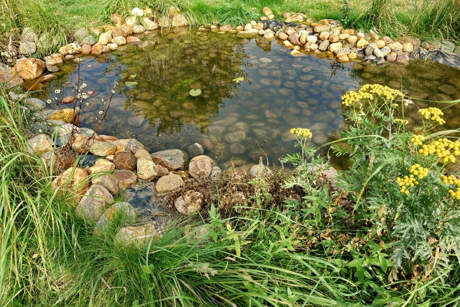 Small Artificial Decorative Pond With Rocks And Plants On The Backyard In Summer