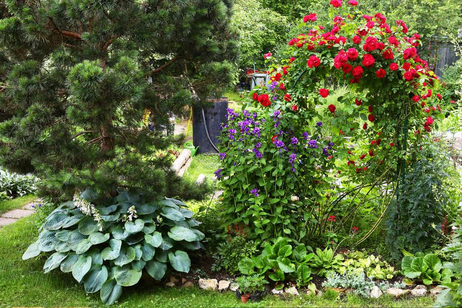 Beautiful designed formal summer garden with pine tree red rose bush and decorative plants