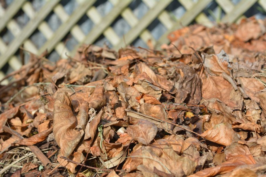 Dry tree leaves in a garden compost