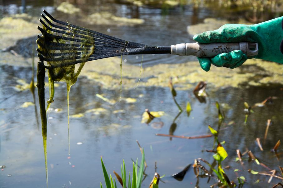 Cleaning a Pond