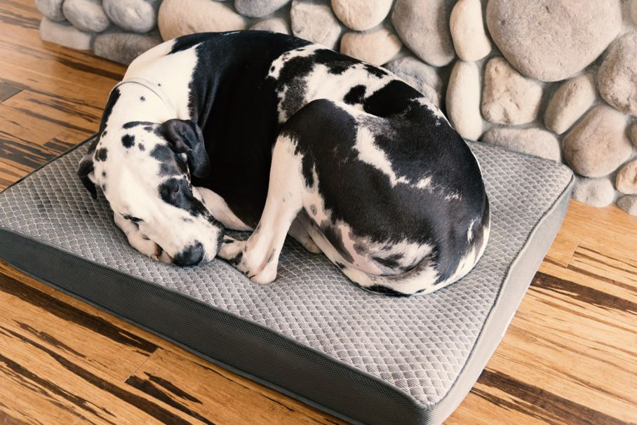 The Pros Amp Cons Of Egg Crate Foam Dog Beds House Tipster