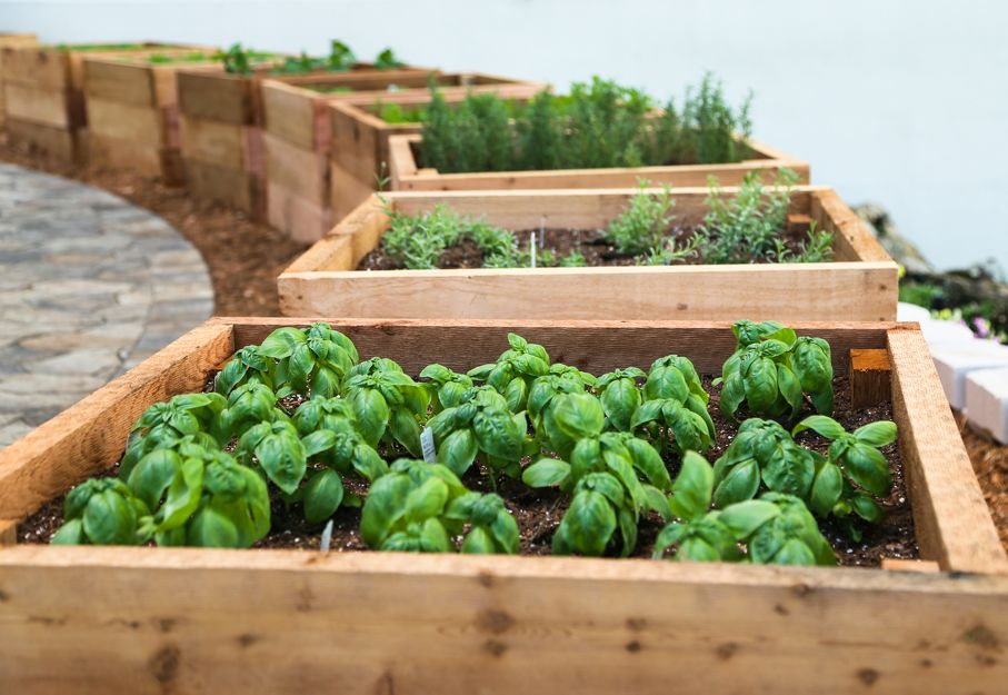 Each herb has its own box in this circular Herb Garden