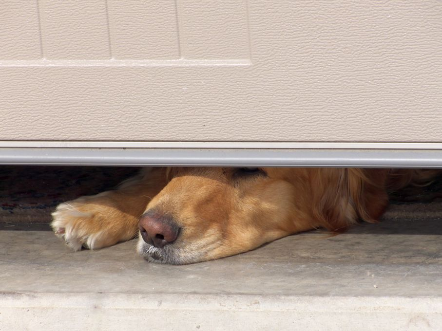 Dogs Nose Under Garage Door