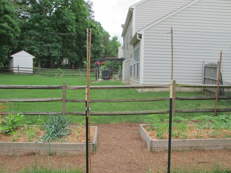 How To Build A Deer Proof Garden Fence House Tipster