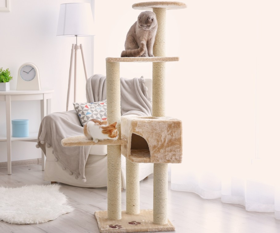 How To Pick The Best Cat Tree For A Small Apartment