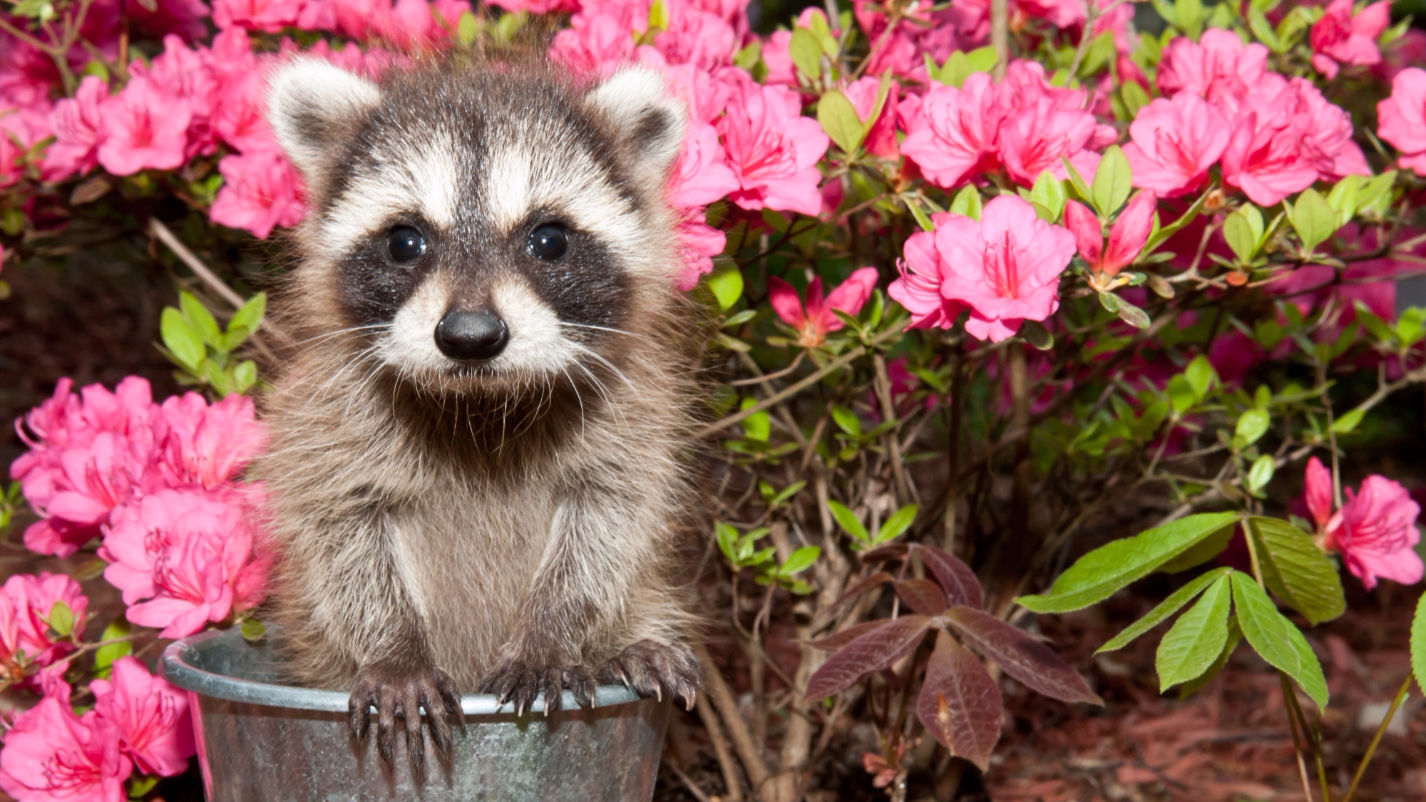 Best Ways to Keep Animals Out of Your Garden | House Tipster